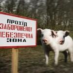 Двуглавые свиньи Чернобыля: как катастрофа на самом деле изменила местную жизнь