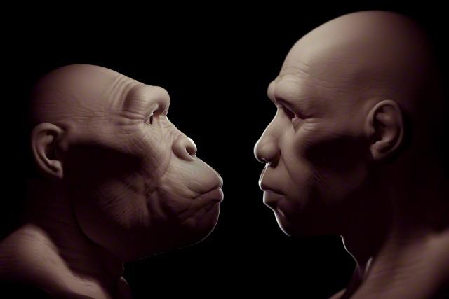 Орудия труда, позволяющие резать мясо, позволили нашим предкам использовать рот для других целей. Слева – австралопитек, один из наиболее вероятных предков человека, справа – Homo sapiens. (Фото Science Picture Co. / Corbis.)