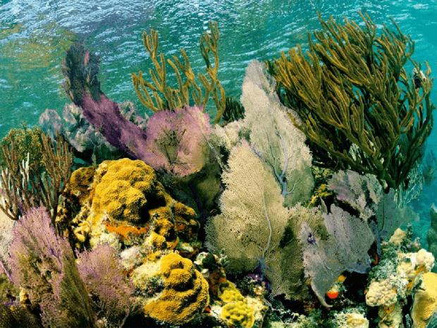 Рисунок 4. Коралловые рифы — настоящее чудо природы, сохранять которое необходимо как из эстетических соображений, так и для обеспечения безопасного существования миллиона видов животных. Рисунок с сайта nationalgeographic.com.