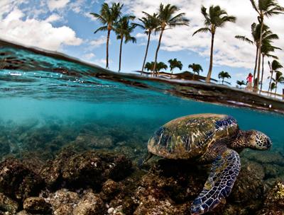 Сможет ли человек сохранить редкие виды морских животных и уберечь океан от дефаунизации? Рисунок с сайта nationalgeographic.com