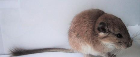 У птиц, как известно, доказано гибридное происхождение лишь у одного вида – итальянского воробья Passer italiae. В большинстве случаев гибридные зоны, когда они узки и устойчивы во времени и пространстве, лишь каналы обмена генами, «заимствуемыми» формами друг у друга без потери...