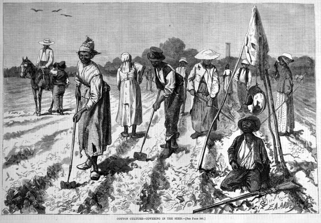 Рабы на уборке хлопка (Юг США, 1850 год)