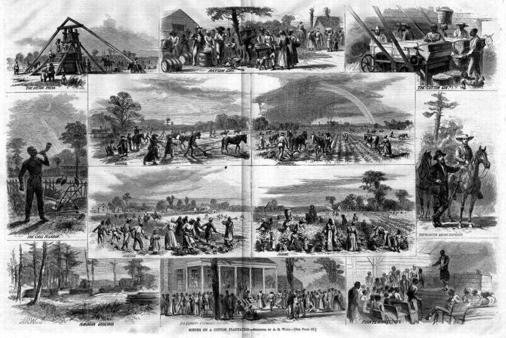 Рабы занимаются сбором урожая сахарного тростника (штат Луизиана, 1853 год)