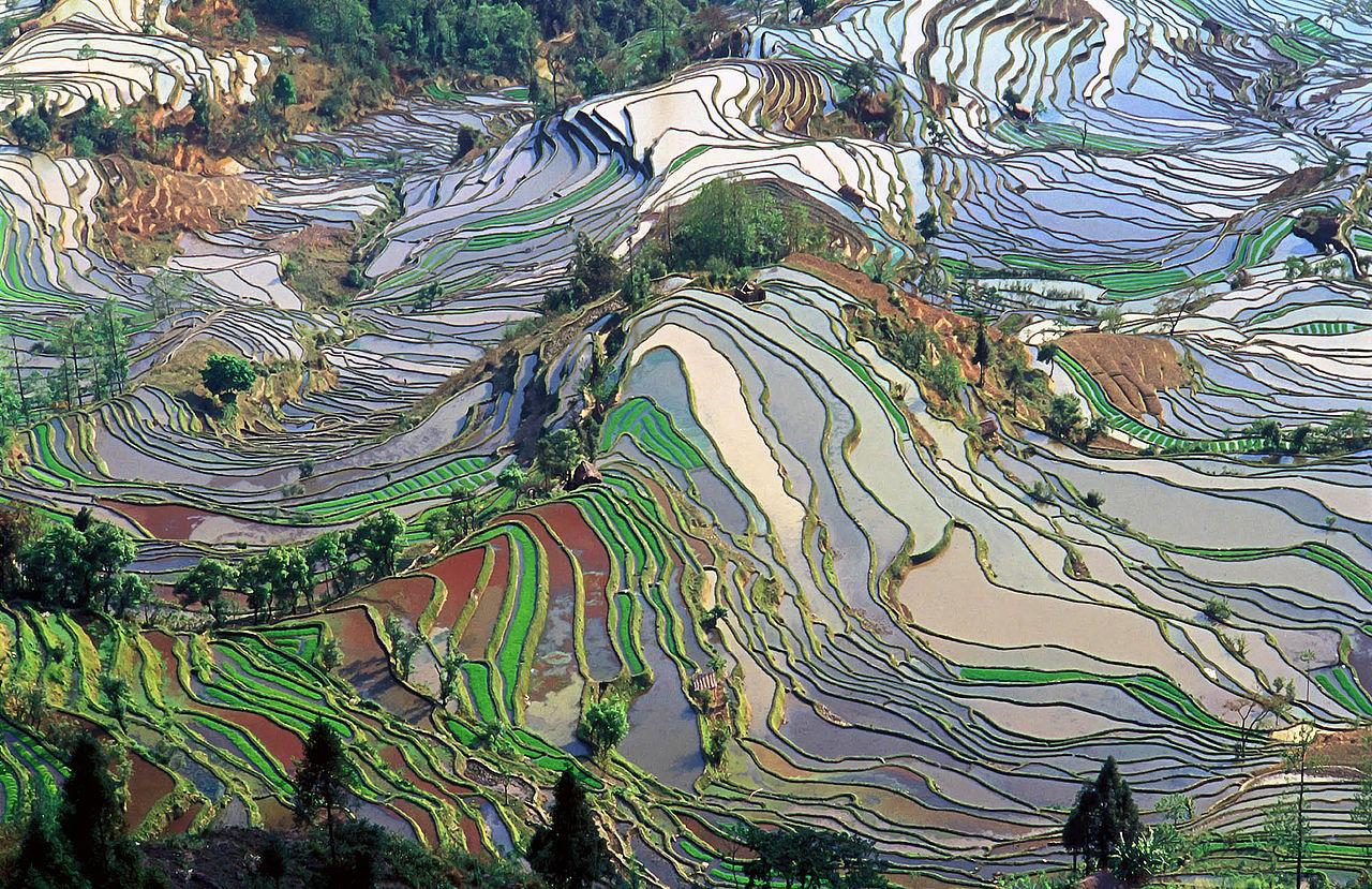 Рисовые террасы в Юннани...
