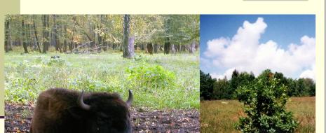Даже крупнейшие ООПТ на староосвоенных территориях — не «чудом сохранившиеся» уголки девственной природы, эти ландшафты в предшествующее тысячелетие-два сильно изменены интенсивным природопользованием — подсекой, перелогом и т.д. «кочевыми» формами ведения с/х. Сейчас выясняется, что...