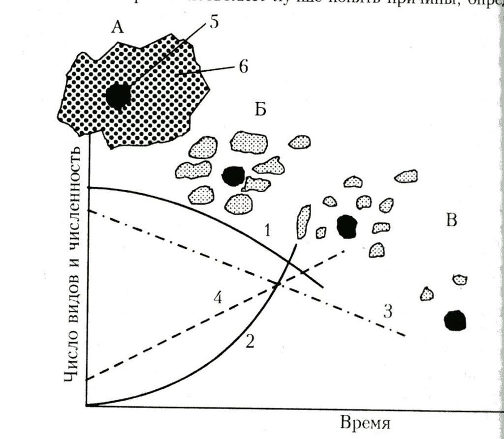 """Пример неблагоприятной динамики """"островного ландшафта"""" исходных местообитаний при урбанизации региона"""