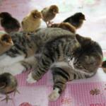 Поведение и физиология в оценке состояния животного