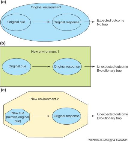"""Разные способы попадания в """"ловушку"""". Из: Schläpfer et al., 2002"""