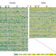 Print PDF Резюме. Серия статей Дафны Джоэл и других нейробиологов, разрушивших представление о «женском» мозге как оппозиции «мужского». На всех трёх уровнях рассмотрения соответствующего полиморфизма — разнообразие анатомии мозга разных […]