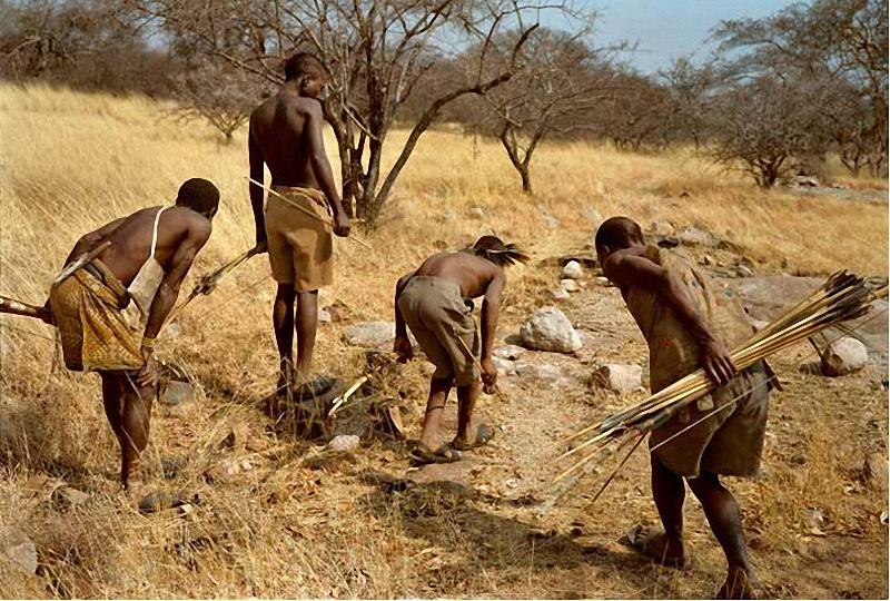 Охотники хадза преследуют раненого бородавочника по следам и каплям крови