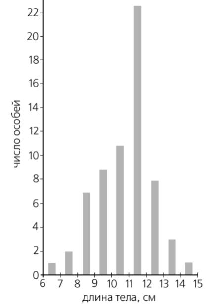 Вариации размеров озерной лягушки из «ручьевой» популяции (1998 г.). Больше всего теперь лягушек, достигающих в длину почти 12 см.