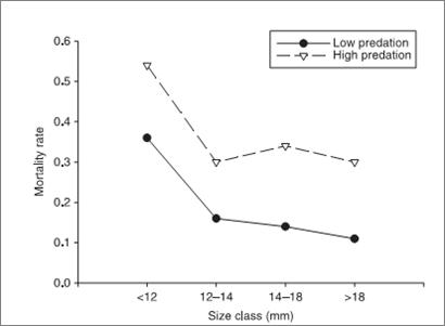 Рисунок 1. Сравнение уровней смертности гуппи в местообитаниях с высоким (далее А) и низким риском хищничества (далее Б). Данные  по 7 разным точкам А и 7 – Б из 3-х речных бассейнов. Риск гибели рассчитан по данным мечения с повторным отловом через 12 дней.