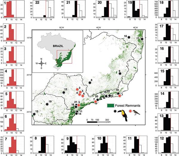 Распределение частот семян разного размера (диаграммы вокруг карты), образуемых в 22 популяциях пальмы Euterpe edulis. Красными кружками (1–7) показаны популяции из нарушенных местообитаний, где питающиеся крупными плодами птицы были истреблены полностью или стали крайне малочисленными. Черными точками показаны популяции из ненарушенных местообитаний, где такие птицы еще остались. Красным и черным цветом выделены также соответствующие им диаграммы. Красная вертикальная черта на каждой диаграмме отмечает 12 мм — критический размер, соответствующий минимальному диаметру глотки птиц, способных потреблять крупные плоды. Зеленым цветом на карте показаны остатки леса. Из обсуждаемой статьи в Science