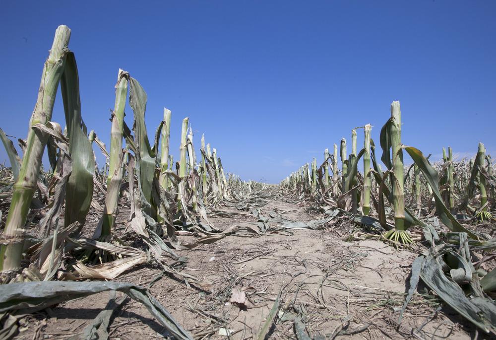 Засуха и опустынивание - одни из главных проблем землепользования