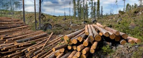Print PDF За последнее время вышло в свет множество сообщений и докладов, касающихся глобального экологического кризиса, материалы о котором мы публиковали неоднократно. Мы решили собрать некоторые из них в подборку, […]