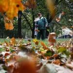 Уборка листвы в Москве: пробелы в законодательстве и их последствия