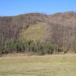 Лес и климат. Влияние изменений климата на леса России: зафиксированные воздействия