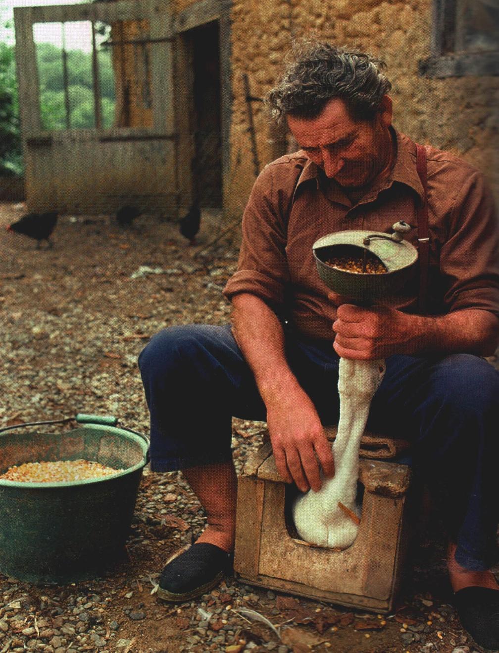 Насильственный откорм гуся, вызывающий жировое перерождение печени при приготовлении фуа гра. Источник Еженедельный журнал