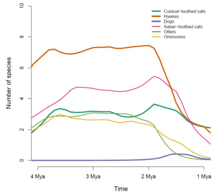 Рис. 3. Реконструкция динамики видового разнообразия крупных хищников в рассматриваемом районе. Показаны данные по шести важнейшим группам: кошачьи с коническими зубами, то есть несаблезубые (Conical-toothed cats), гиены (Hyenas), псовые (Dogs), саблезубые кошки (Saber-toothed cats), гигантские выдры (otters) и «всеядные» (Omnivores). В последнюю группу входят вымерший медведь Agriotherium, гигантская куница и три вида гигантских цивет. По горизонтальной оси — время в млн лет назад, по вертикальной — число видов. То, что это число обычно нецелое, связано с тем, что разнообразие реконструировалось сложными статистическими методами на основе заведомо неполной выборки и неточных датировок. Толстыми линиями показаны группы, существующие по сей день, тонкими — исчезнувшие. Рисунок из дополнительных материалов к обсуждаемой статье в Ecology Letters