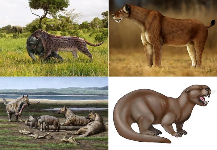 Рис. 1. Некоторые крупные хищники, когда-то обитавшие в Восточной Африке вместе с гоминидами. 1) Саблезубая кошка Dinophelis sp. (тащит убитого австралопитека). В изученном районе в рассматриваемое время встречалось как минимум три вида этого рода. Возраст самых старых находок 4,23–4,07 млн лет, самых молодых 1,0–0,9 млн лет. Рисунок Романа Евсеева с сайта oursociety.ru. 2) Саблезубая кошка Homotherium sp. (от 4,35–4,1 до 1,64–1,39 млн лет). Рисунок © Peter Hutzler с сайта www.newdinosaurs.com. 3) Гигантская гиена Pachycrocuta sp. (от 3,85–3,63 до 3,2–3,0 млн лет). Рисунок © Mauricio Antón с сайта scientificamerican.com. 4) Гигантская выдра Enhydriodon dikikae. В изученном районе водилось 4 вида этого рода, и все были крупные. Возраст самых древних находок гигантских выдр на этой территории — 4,23–4,07, самых молодых — 2–1,88 млн лет