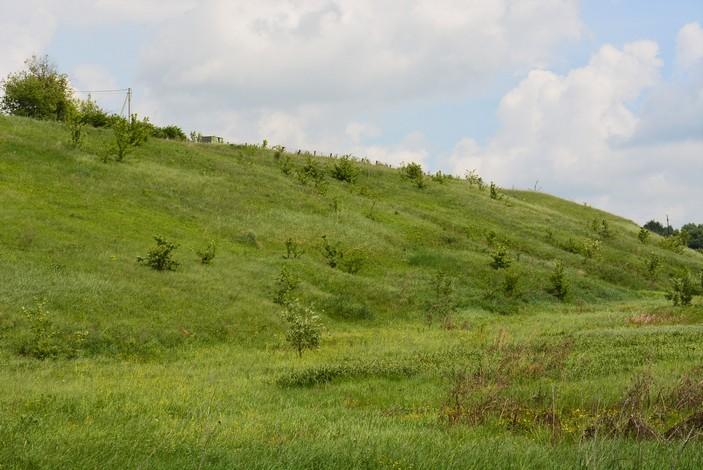 ипичное местообитание садовой овсянки — зарастающий склон речной долины. Этот вид предпочитает сухие открытые биотопы с отдельными кустарниками и деревьями, в том числе степи, поля и опушки лесов. А вот густых лесов и садов эта овсянка, вопреки названию, избегает. Это далеко не единственный случай, когда укоренившееся название птицы не соответствует его экологическим предпочтениям. Интересно, что в некоторых регионах России в XIX веке птицеловы называли садовых овсянок «полевыми», однако это более корректное название не прижилось. Фото © Сергей Коленов, долина реки Рыкша, Чувашская Республика, 1 июня 2019 года