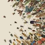 Апокалипсис мира насекомых.  Каковы его последствия для биосферы Земли?