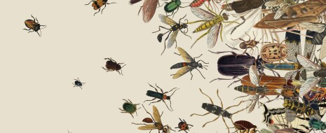 Резюме переводчика. В последние годы и профессионалы, и любители отмечают не только исчезновение тех или иных видов насекомых, но и общее снижение их численности. Каковы последствия этого процесса для жизни на ...