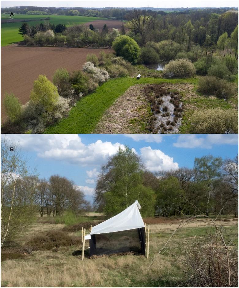 Два ландшафта в природном резервате на с.-з. Германии, где вели мониторинг. Внизу - ловушка Малеза