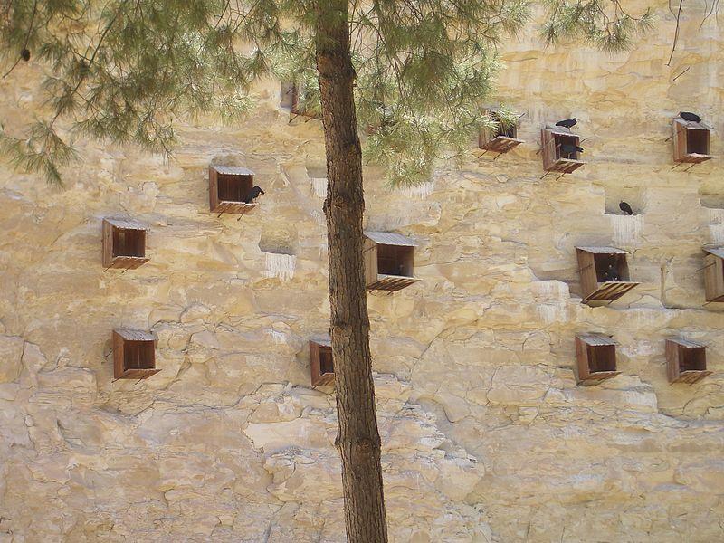 Искусственные гнёзда для колонии  в Биречике