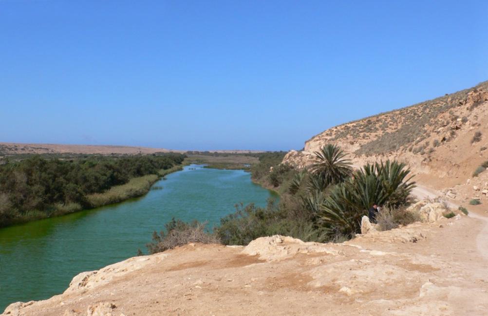 Излюбленные места кормления ибисов в Южном Марокко, и кормящиеся в сухой степи  стая