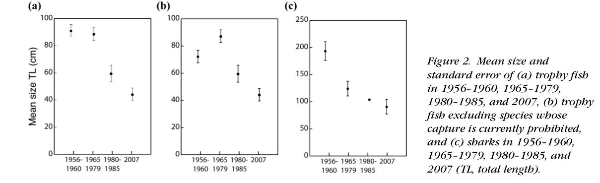 Долговременное уменьшение линейных размеров уловов там же по данным измерений. Из: McLeannon, 2009, op.cit.