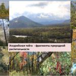Теоретические основы оптимизации функции биоразнообразия лесного покрова  (синтез современных представлений)