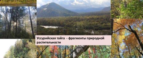 Дан синтез современных представлений, посвященных проблемам сохранения и восстановления биоразнообразия лесного покрова. Теоретическую основу реконструкции потенциального лесного...