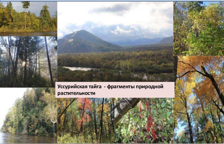 Здесь и далее иллюстрации из лекций О.В.Смирновой. Лекция 7. Потенциальная растительность и потенциальный экосистемный покров