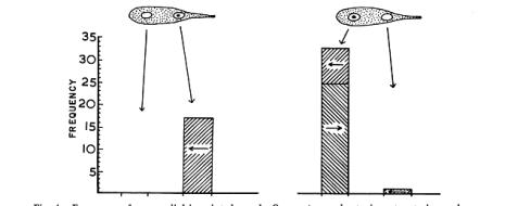 Что такое «инстинкт» с научной точки зрения? Чем отличается «инстинкт» от «рефлекса» и «побуждения»? У каких животных есть инстинкты? В каких областях жизнедеятельности они чаще всего встречаются? В чём ошибочность наиболее распространённых мифов про инстинкты? Как менялось научное мировоззрение в области изучения инстинктов?