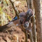 Птицы против летучих мышей
