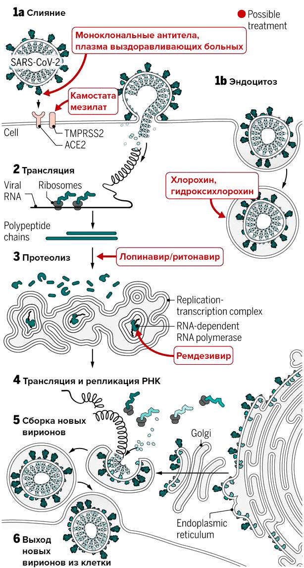 2831-03.preparaty-protiv-SARS-CoV-2