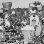 Хлопок, рабство, Новая история капитализма