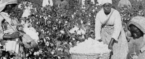 """Print PDF Алан Олмстед, Пол Род Резюме. Американские рабы, собиравшие хлопок-сырец, обеспечили развитие промышленному капитализму. Это ключевая идея концепции """"Новой истории капитализма"""". В концепцию обычно включают три современные монографии: """"Империю […]"""