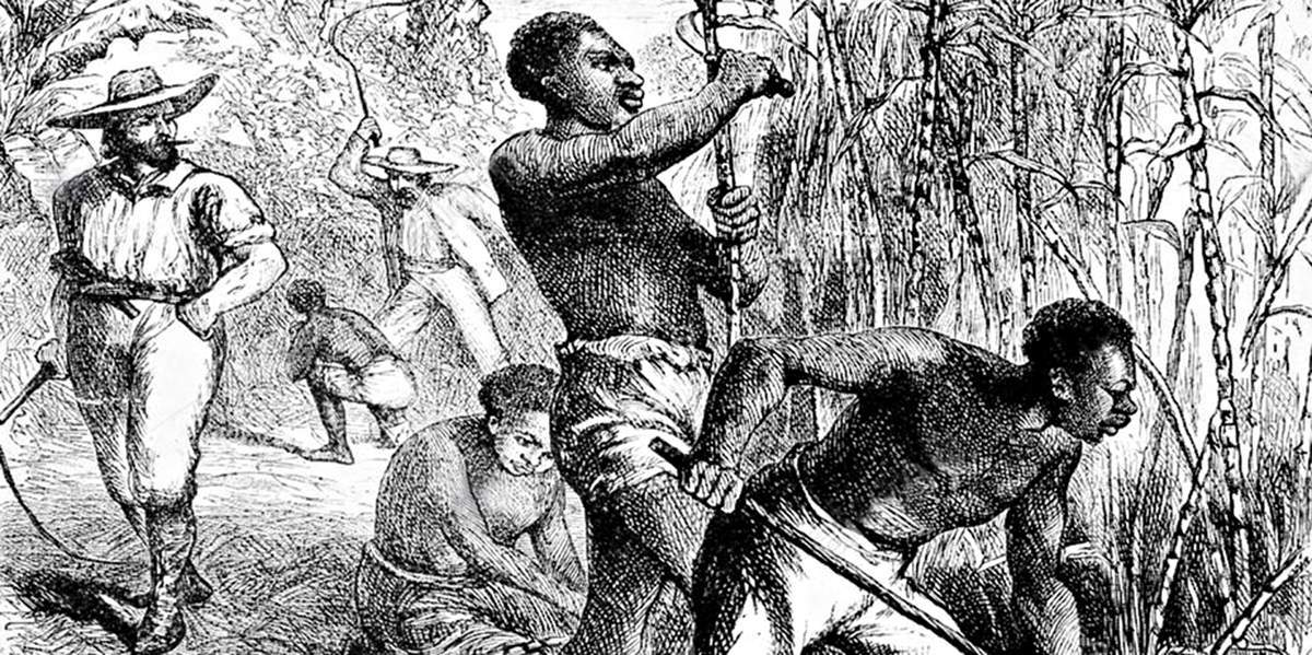 Плантации сахарного тростника в Вест-Индии
