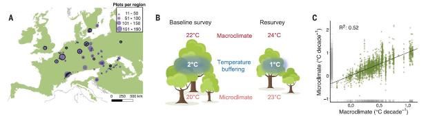 A — расположение площадок, B - разница температур в пологе и подлеске в 1934 и 2017 годах, C - корреляция между микро- и макроклиматом. Florian Zellweger et al. / Science, 2020