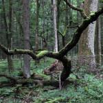 Устойчивость умеренных лесов к потеплению связали с локальным микроклиматом