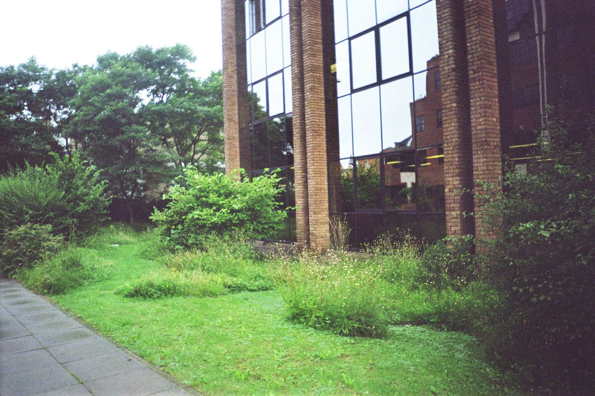 Мозаичное выкашвание разнотравного газона. Великобритания, Питерборо. Офис государственного агентства по охране природы. Англии English Nature Фото: Л.Б. Волкова.