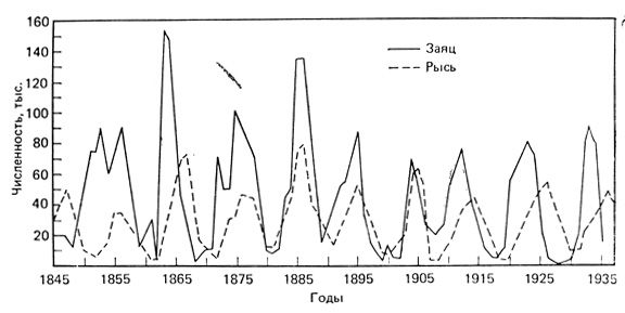 Изменения численности рыси и зайца-беляка, регистрируемые по числу шкурок, заготовленных Компанией Гудзонова залива. Это классический пример циклических колебаний плотности популяций. (Рисунок из работы MacLulich, 1937)