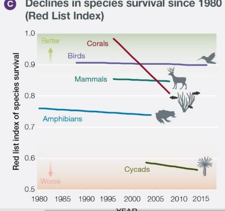 Рисунок 5. А. Значительная часть оцениваемых видов находится под угрозой исчезновения, и общие тенденции ухудшаются, причем темпы вымирания резко возросли в прошлом столетии. А. % угрожаемых видов в разных таксонах, оцененный или полностью, или по выборкам из отдельных категорий, упоминаемых в Красной книге и Красных списках МСОП (цвета: чем зеленей — тем благополучней, чем красней тем ближе к вымиранию). Таксоны упорядочены в соответствии с наилучшей оценкой процента; предполагается, что угрозы плохо изученным видам каждой группы не отличаются от таковых у изученных лучше. B) вымирание разных групп позвоночных с 1500 года, показаны кумуляты % вымерших видов в зависимости от времени. Базовый уровень вымираний до появления человека — 0,2-2 вымирания/миллион видов в город. С) «Выживаемость» видов разных таксонов в Красном списке: движение индексов, характеризующих их состояние во времени (к 1 — вид спасён, стал благополучен, к 0 — вымер). Видно резкое ухудшение ситуации в последние 30 лет бесконтрольного капитализма. Динамика дана для видов, чьё состояние при составлении списков оценивалось не менее 2 раз. Данные для всех панелей получены из www.iucnredlist.org.