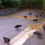 Поведенческие изменения в «городских» популяциях птиц — нет общего с одомашниванием