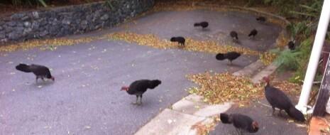 """Ещё одна «работа над ошибками»: почему урбанизацию """"диких"""" видов птиц и млекопитающих нельзя интерпретировать по лекалам доместикации домашних (увы, я сперва данному подходу доверял). Обсуждаются системные различия поведенческих изменений при урбанизации «диких» видов птиц и млекопитающих, с одной стороны, и доместикации, с другой. Показана, что..."""