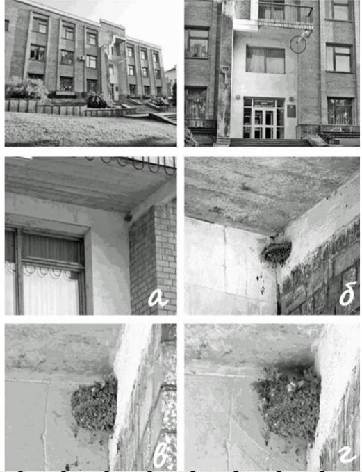 Гнездо скальной ласточки Ptyonoprogne rupestris на административном здании санатория «Красные камни» в Кисловодске (а, б – в 2011 году; в, г – в 2012 году). Источник Тельпов и др., 2012.