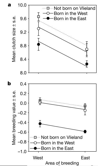 Рисунок 2. Пространственные изменения размера кладки. а. Разница её величины у самок в зависимости от места рождения (серый квадрат — не на острове, белый кружок — в «западном», чёрный — в «восточном» поселении) и места гнездования (левый столбец - «западное», правый - «восточное» поселения). Места происхождения и размножения оба — значимые действующие факторы, а их взаимодействие - нет (F1,67 = 6,43, P = 0,014; F1,67 = 11,0, P = 0,002, но: F1,66 = 0,01, P = 0,94). Иммигрантки значимо не отличаются от «западнорожденных» самок, но отличаются от восточных (критерий Тьюки-Крамера, с поправкой на множественные сравнения, t108 = 1,15, P = 0,25 и t108 =3,86, P = 0,006). b. Средний прогнозируемый размер кладки для самцов тех же категорий (рождённых на «Западе» или «Востоке»). Происхождение и район размножения здесь также значимы: F1,56 = 57,9, P < 0,001; F1,56 = 8,11; P = 0,006). Иммигранты не отличаются «западнорожденных» самцов: (t82=1,03, P = 0,31), но они отличаются от родившихся на «востоке» острова (t82 = 10,02, P <0,001).